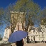 Parapluie de Berger bleu devant le château de Pau