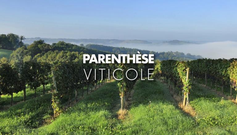 Pieds de vignes dans le Madiran en Béarn