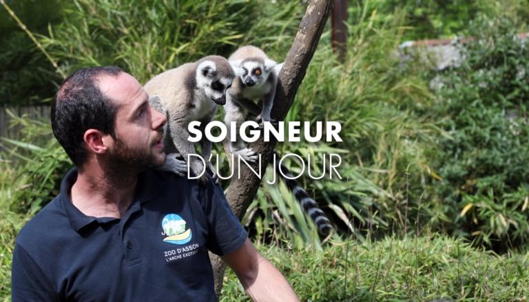Soigneur du zoo d'Asson avec des lémuriens sur les épaules