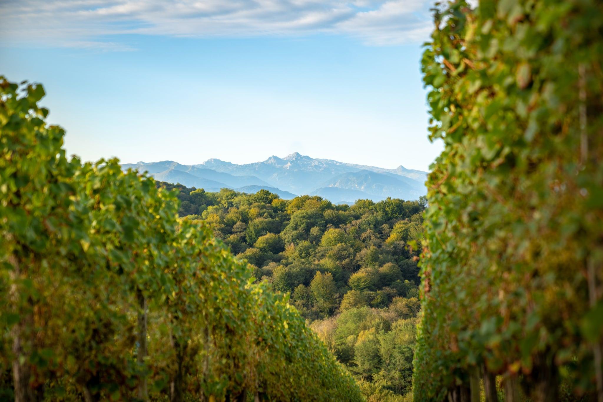 sejour-bearn-Jurançon-paysage-vignoble©P.Carton