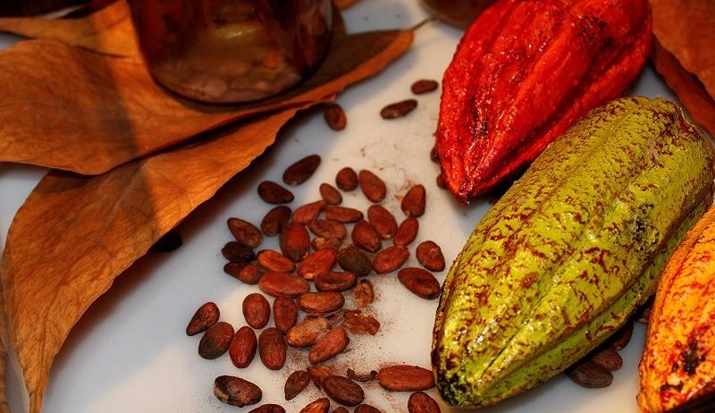 sejour-culture-gastronomie-paysbasque-bayonne-feves-de-cacao-exposition-musee-du-chocolat-atelier-du-chocolat-bayonne