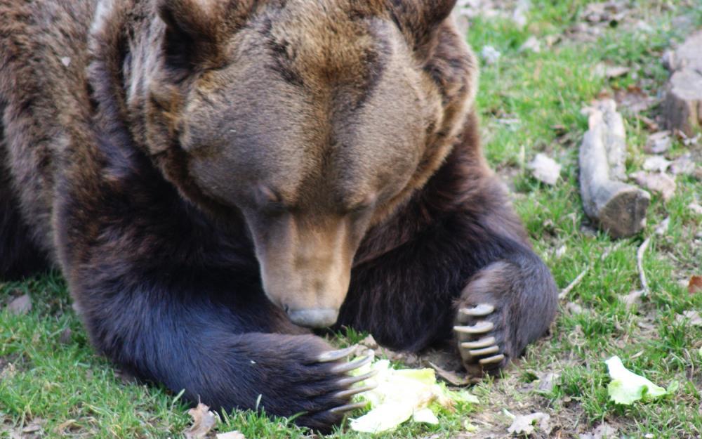 sejour-multiactivités-bearn-parc-animalier-parcours-borce1