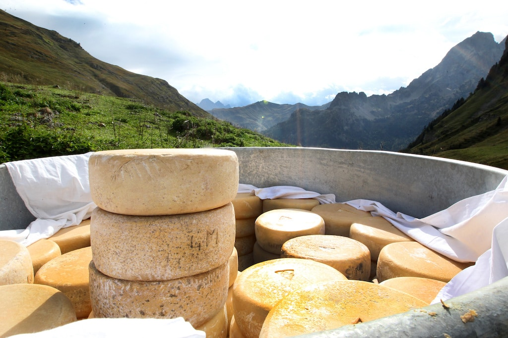 la descente des fromages des estives ‡ Bious Artigues