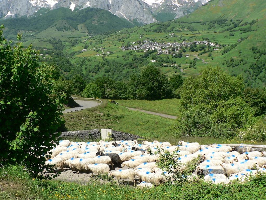 sejour-pyrenees-bearnaises-Lescun et les moutons 02 ©CDT64