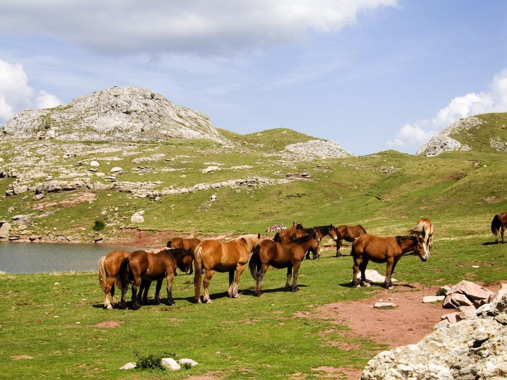 sejour-pyrenees-bearnaises-estaens009©MCCalmettes