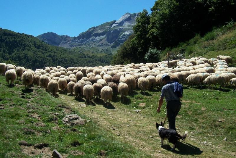 sejour-vallee-ossau-bearn-Randonnée-pastoralisme-Berger-et-son-troupeau